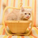 Kitten in basket Royalty Free Stock Photo
