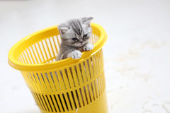 Kitten in the basket Royalty Free Stock Photo