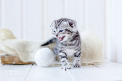 Kitten in basket meow, crying for mother. Stock Images