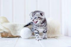 Kitten in basket meow, crying for mother. Kitten in basket meow, crying for mother Stock Images