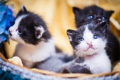 Kitten in basket Stock Images