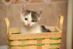 Kitten in a basket royalty free stock photo