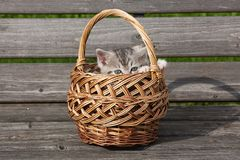 Kitten in a basket. Portrait of a pet on the bench Royalty Free Stock Photos