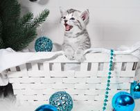 The kitten in the basket screams. Meow kitten congratulates. With Christmas and a happy new yea Stock Photo