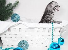 The kitten in the basket screams. Meow kitten congratulates. With Christmas and a happy new yea Stock Images