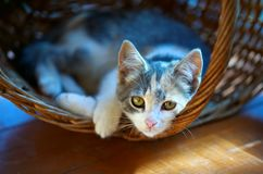 Kitten in basket. Summer sun pretty background Royalty Free Stock Image