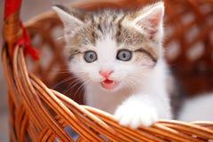 Kitten in Basket. Sun Summer day Royalty Free Stock Photography