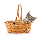 Kitten in a basket. Royalty Free Stock Images