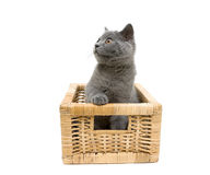 Kitten in a basket on a white background Royalty Free Stock Photography