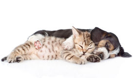 Kitten and basset hound puppy sleeping together. isolated Royalty Free Stock Photos
