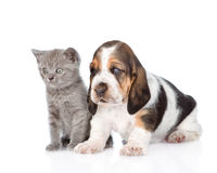 Kitten and basset hound puppy standing together. isolated on white.  royalty free stock photography