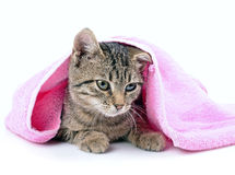Kitten bathing with a towel Stock Images
