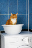 Kitten in a bathroom Stock Photos
