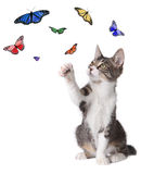 Kitten Batting at Butterflies Royalty Free Stock Photography