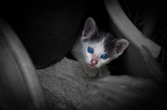 Kitten with beautiful blue eyes,Animal portrait. Playful cat relaxing vacation stock image