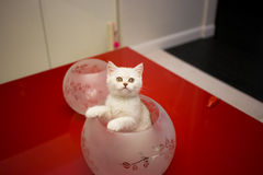 Kitten. Royalty Free Stock Images