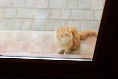 Kitten Behind Door. Cute kitten looking through glass door Stock Photo