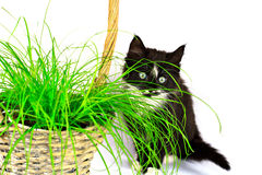 Kitten behind grass Royalty Free Stock Image