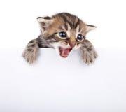 Kitten behind white signboar Stock Photo