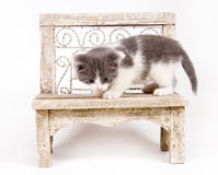 Kitten on a bench Stock Photos