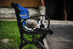 Kitten on a bench. The homeless cat sleeps on a bench Stock Images