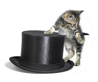 Kitten besides a black top hat Stock Photo