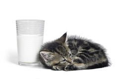 Kitten besides a glass of milk Stock Photos