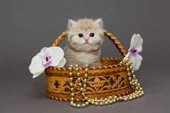 Kitten in a birch bark basket Stock Images