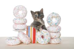 Kitten in birthday present box surrounded by donuts. Adorable diluted tortie kitten sitting in a colorful birthday present box surrounded by white sprinkled royalty free stock photos