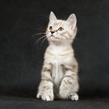 The kitten on a black Stock Images