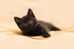 Kitten. Black kitten, pets, cats, lying kitten, kitten playing, funny kitten, funny kitten, feet, ears, eyes, claws, whiskers Royalty Free Stock Image