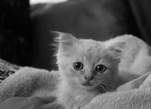 Kitten royalty free stock images