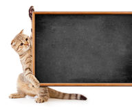 Kitten with blackboard for your text Stock Images