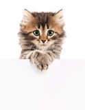 Kitten with blank Stock Photos