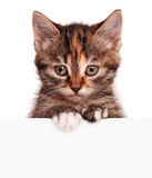 Kitten with blank Stock Photography