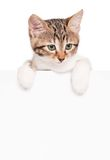 Kitten with a blank Stock Images