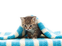 Kitten and blue bedspread Stock Photography