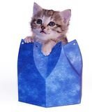 Kitten in blue box Royalty Free Stock Photography