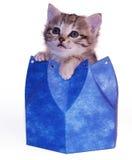Kitten in blue box. Cute kitten in blue box royalty free stock photography