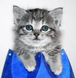 Kitten in blue box. Cute kitten in blue box stock images