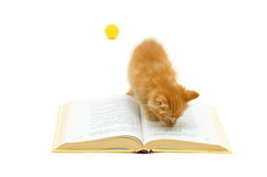 Kitten with book Royalty Free Stock Photos