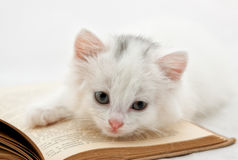 Kitten on book. Cute kitten moans on a thick book Stock Photography