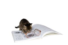 Kitten with book. Little kitten reading book. Isolated image Stock Image