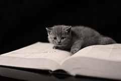 Kitten on a book Royalty Free Stock Images