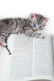 Kitten and book - isolated royalty free stock image