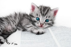 Kitten and book - isolated Royalty Free Stock Photo
