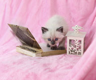 Kitten with book and Lantern on pink background. Kitten with book and Lantern for candles on pink background Royalty Free Stock Image