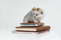Kitten And Books. Small kitten with glasses sitting on books royalty free stock photography