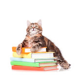 Kitten with books. Cute little kitten with books over white background royalty free stock photo
