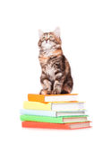 Kitten with books Stock Photography